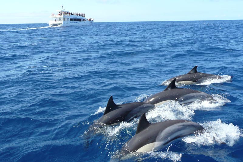 dolphin and whale watching mirissa